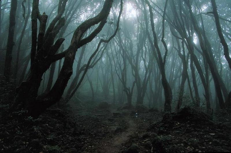 Dark_Forest